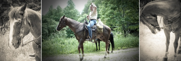 NC_horse