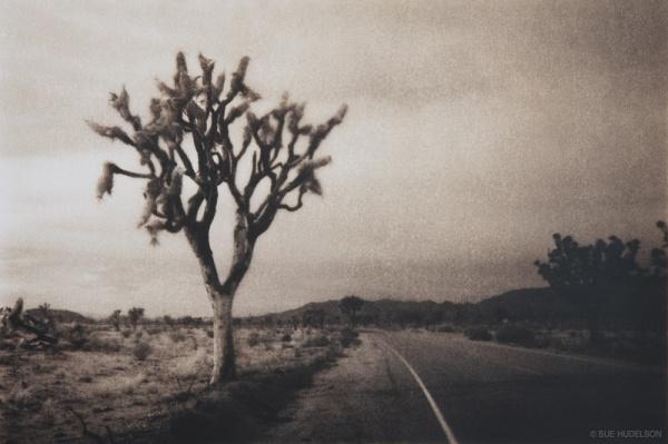 SueHudelson_JTree_road_blog
