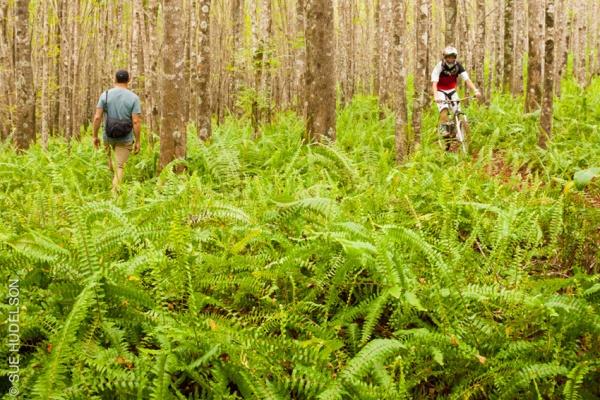 Kahakapao_Trail-0490